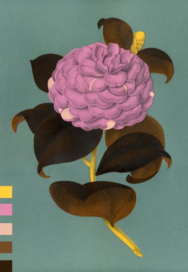 Herbarium Cristina Amodeo